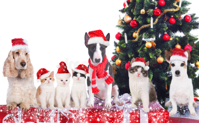 Group of cats and dogs in front of a christmas tree. Group of different cats and dogs in front of a christmas tree stock photos
