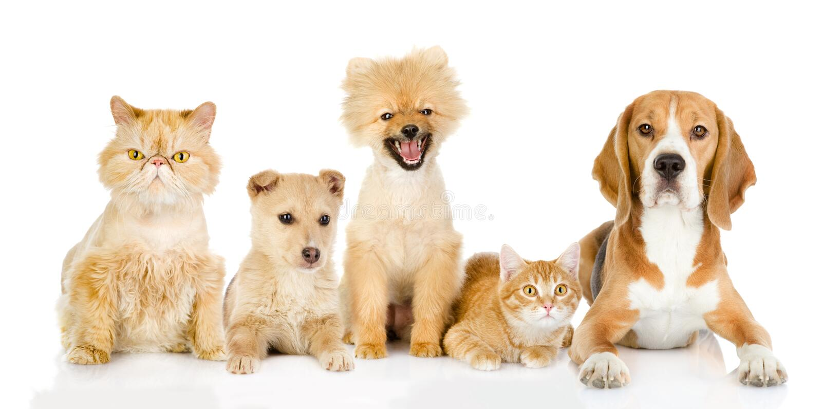 Group of cats and dogs in front. stock photography