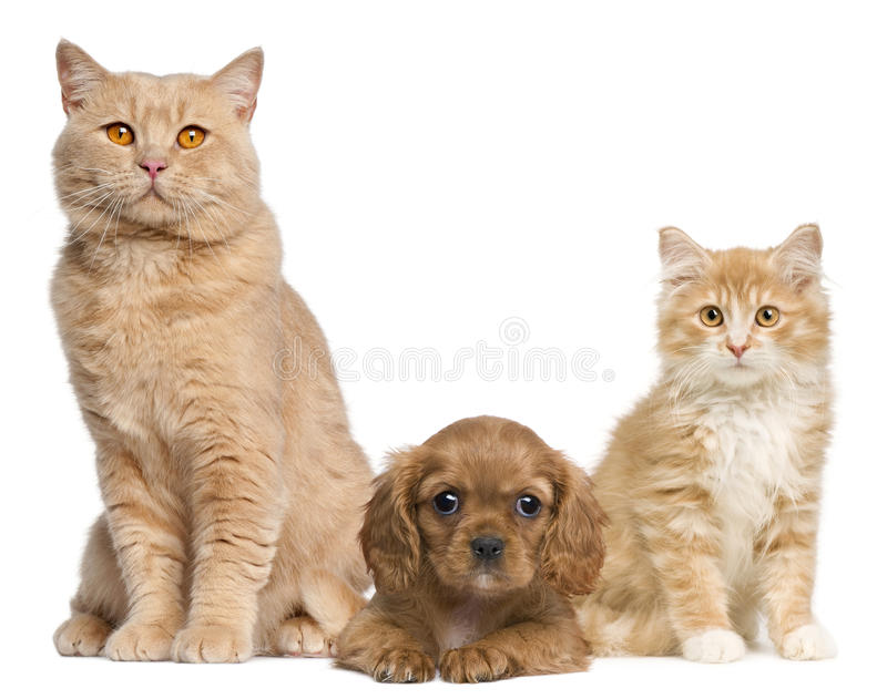Group of cats and dogs in front of white. Background stock photos