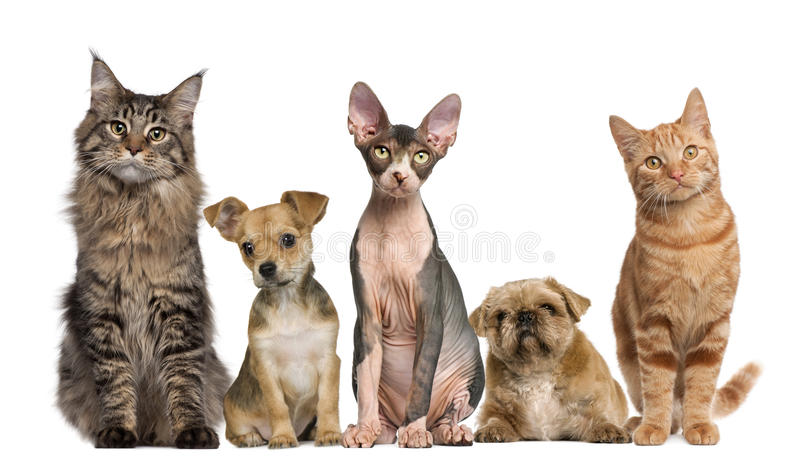Group of cats and dogs in front of white. Background stock images