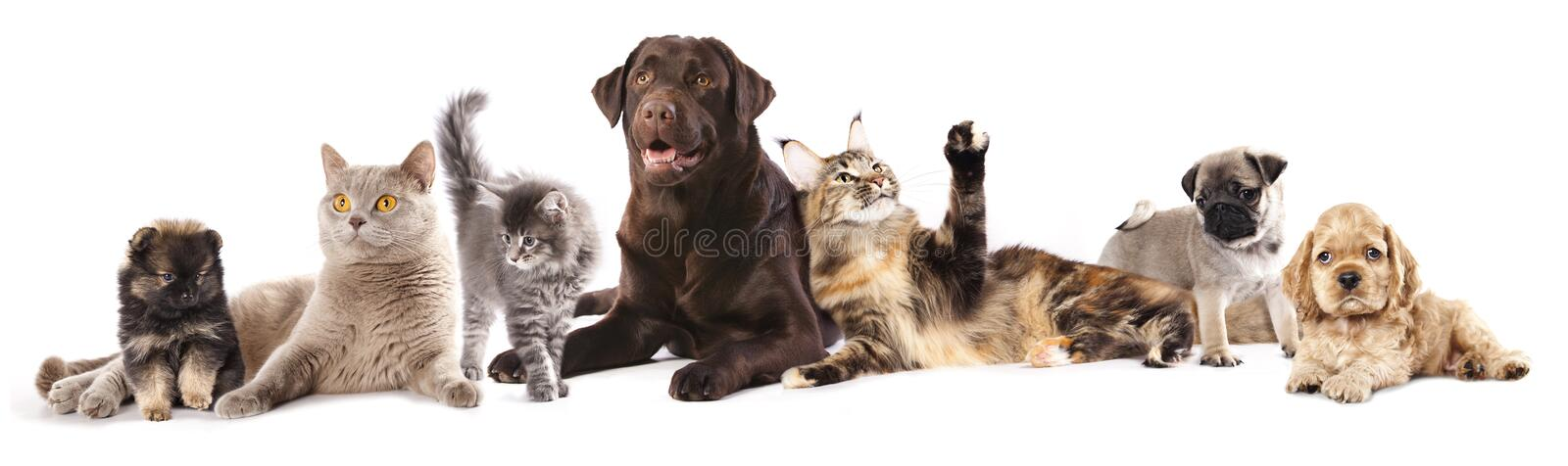 Group of cats and dogs. In front of white background stock image