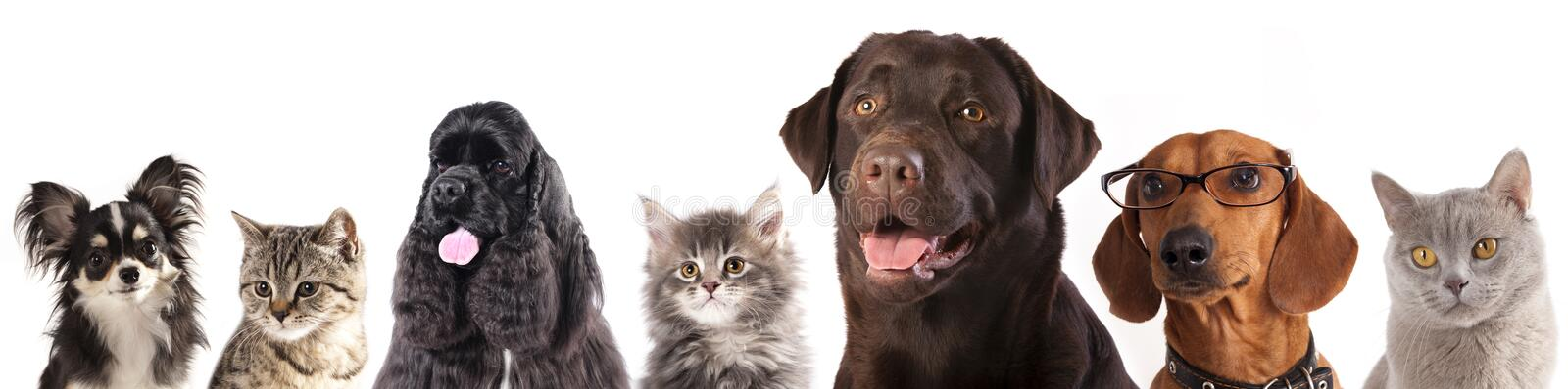 Group of cats and dogs. In front of white background stock photos