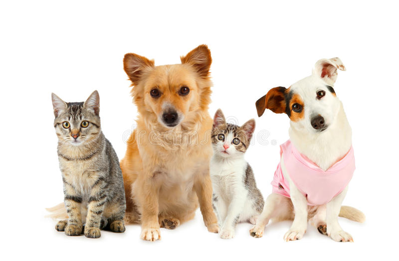 Group of cats and dogs. In front of white background stock photography