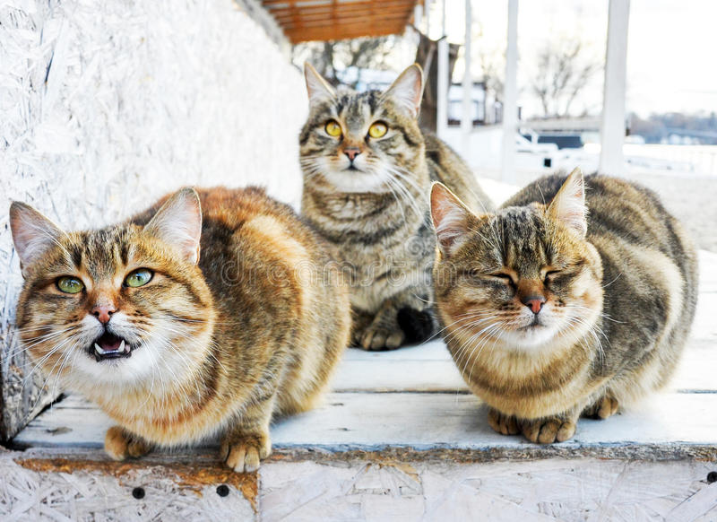 Group of cats stock images