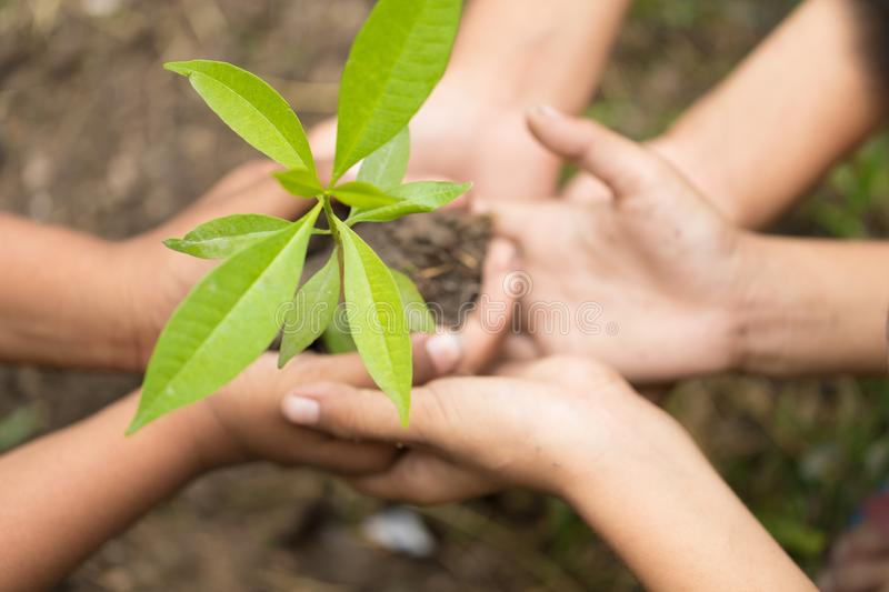 Child holding young seedling plant in hands tree bokeh background. stock photo