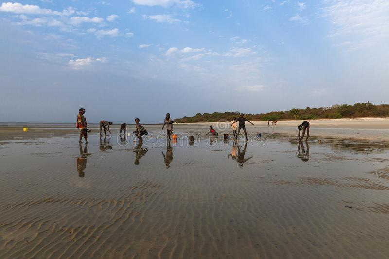 Group of children collecting cockles in the beach at the island of Orango at sunset. stock photography