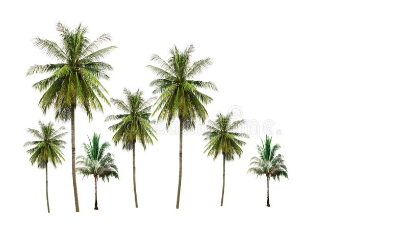 Group of coconut palm trees isolated on white background stock photography