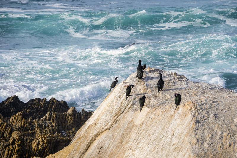 A group of cormorants resting on a rock on the Pacific Ocean coastline; breaking waves in the background; Montana de Oro State stock photos