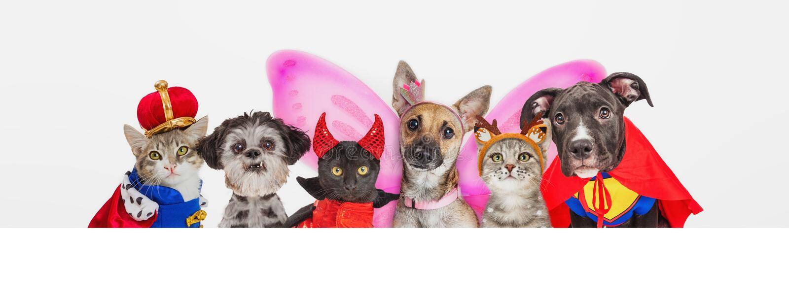 Cute Pets in Halloween Costumes Over Web Banner. Group of cute dogs and cats wearing Halloween costumes in a row over blank white horizontal web banner royalty free stock images