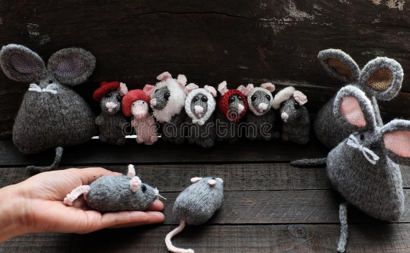 Group of cute grey mice and woman hand hold small rat. Funny concept with group of cute grey mice and woman hand hold small rat on black wooden background royalty free stock photo