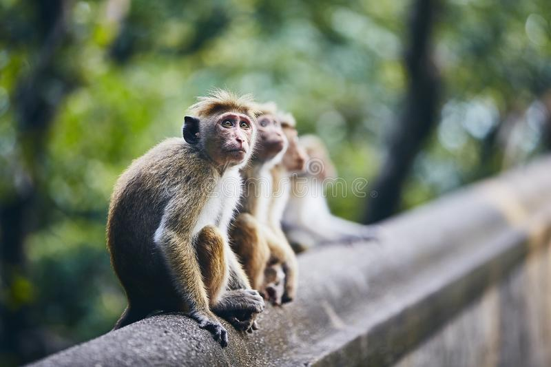 Group of cute monkeys stock photography