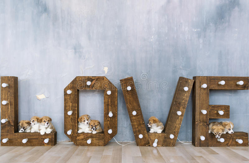 Group of cute puppies against the background of the word love royalty free stock photos