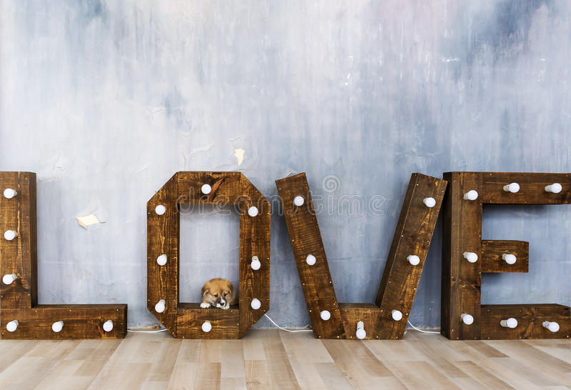 Group of cute puppies against the background of the word love stock image