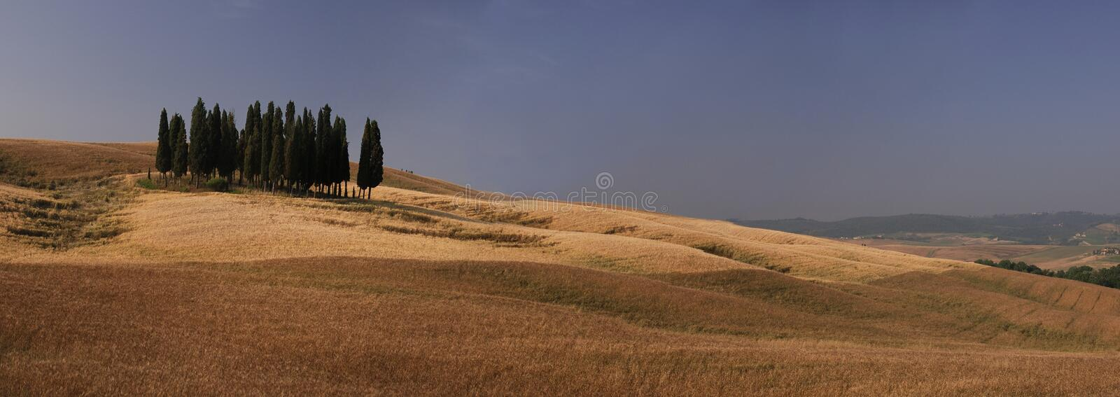 Group of cypresses royalty free stock images
