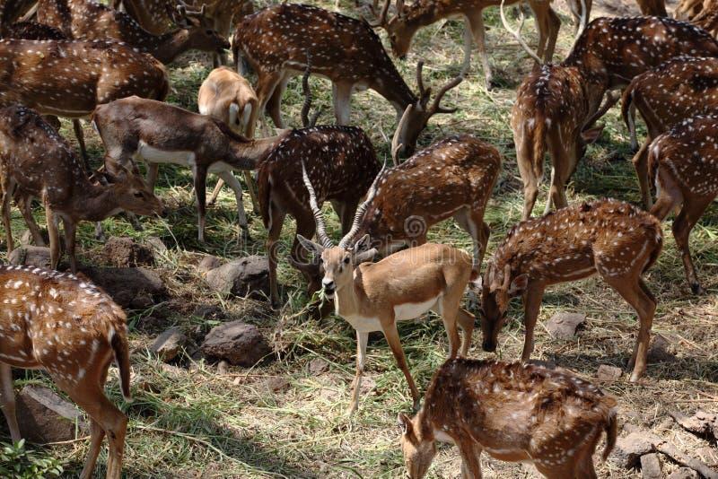 Group of Deer closeup