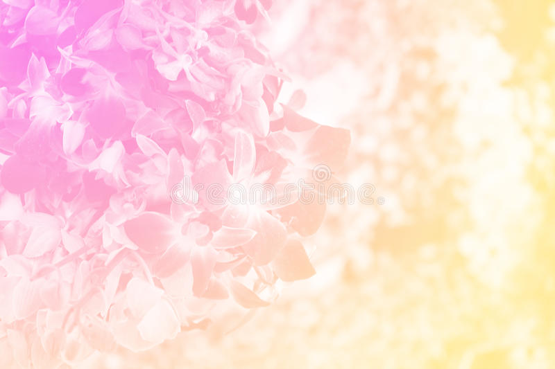Group of dendrobium orchid in soft color royalty free stock photos