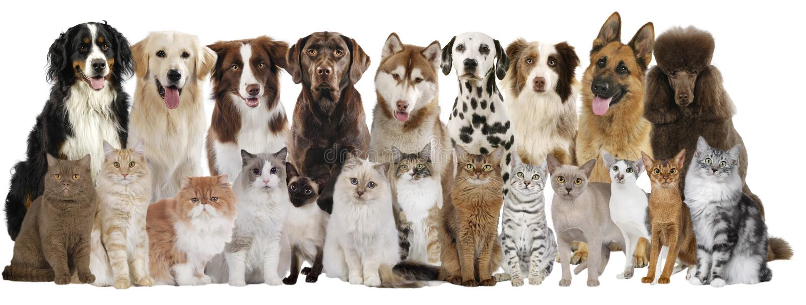 Group of different cats and dogs. Isolated on white stock images