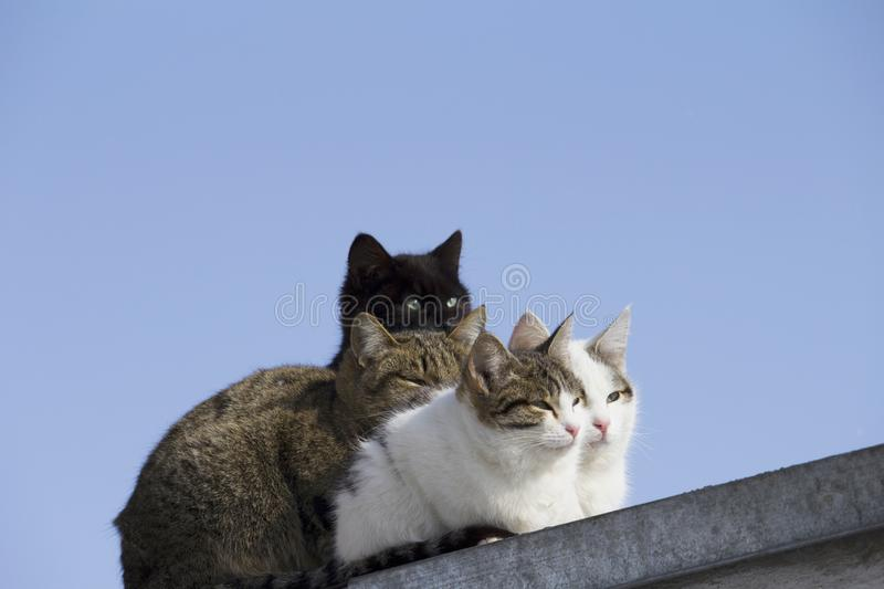 a group of different colors cats on the roof looks away stock photos