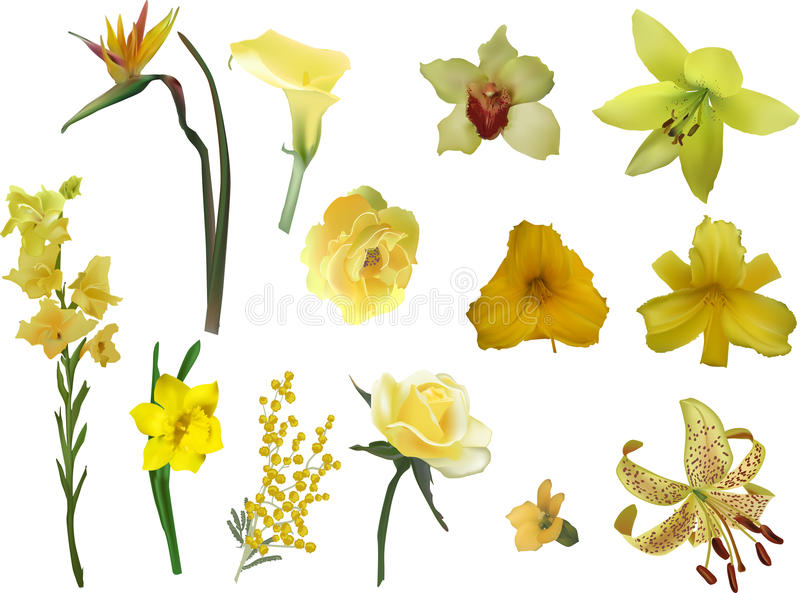 Group of different yellow flowers isolated on white stock vector download group of different yellow flowers isolated on white stock vector illustration of narcus mightylinksfo