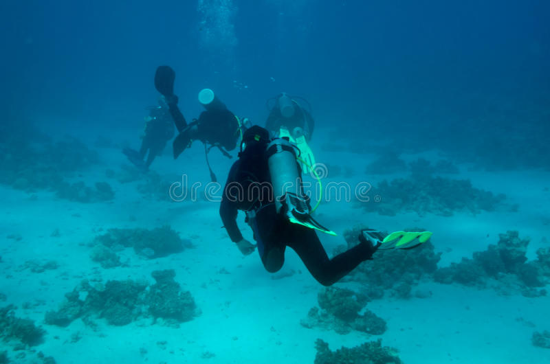 Download A Group Of Divers Drifts Away From The Camera Stock Image - Image of thickness, oxygen: 11342127