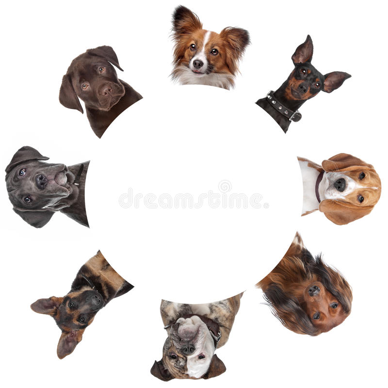 Group of dog portraits around a circle. With clipping path stock image
