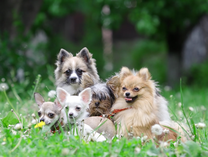 Download Group of dogs. stock photo. Image of grey, beast, branch - 6487166