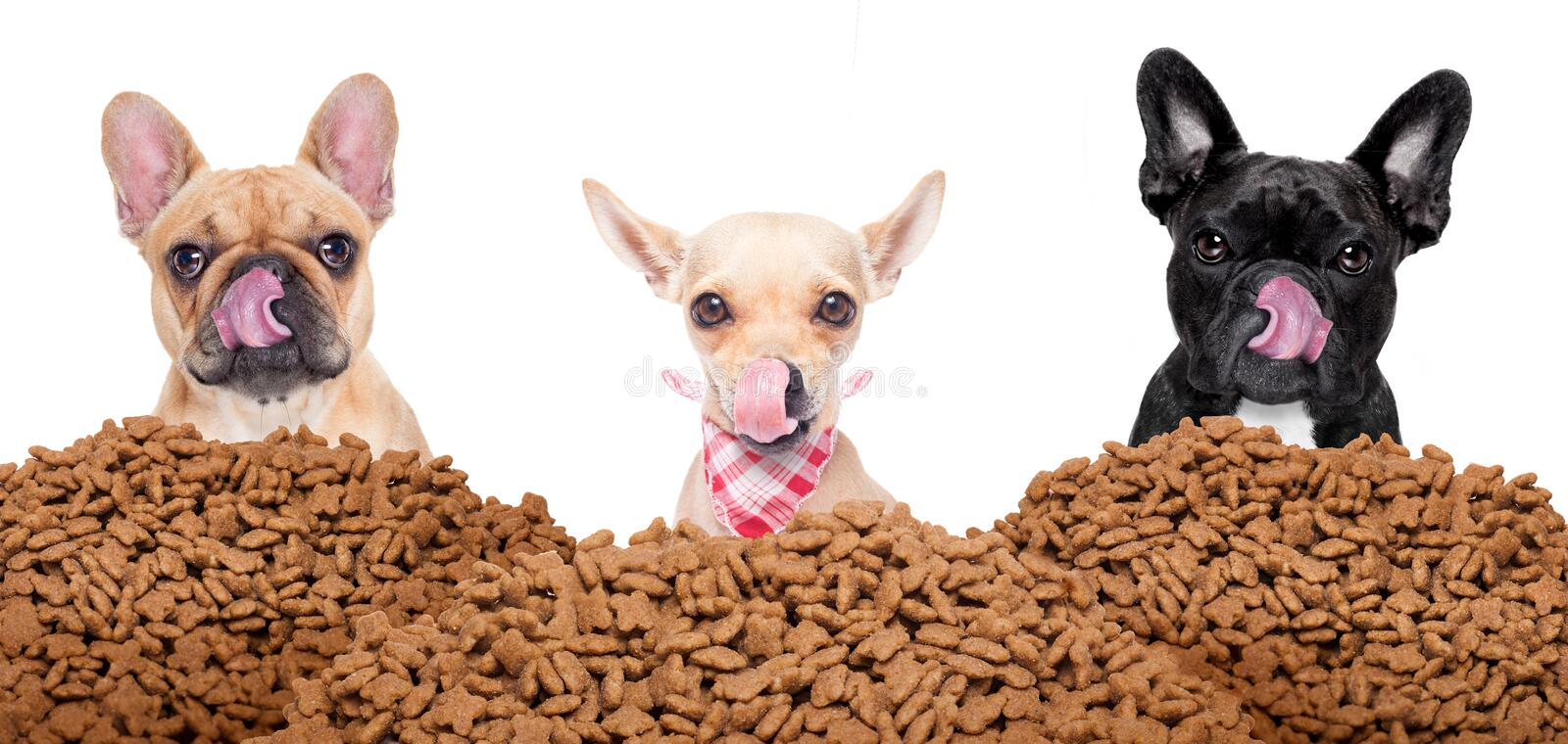 Group of dogs behind mound food royalty free stock images