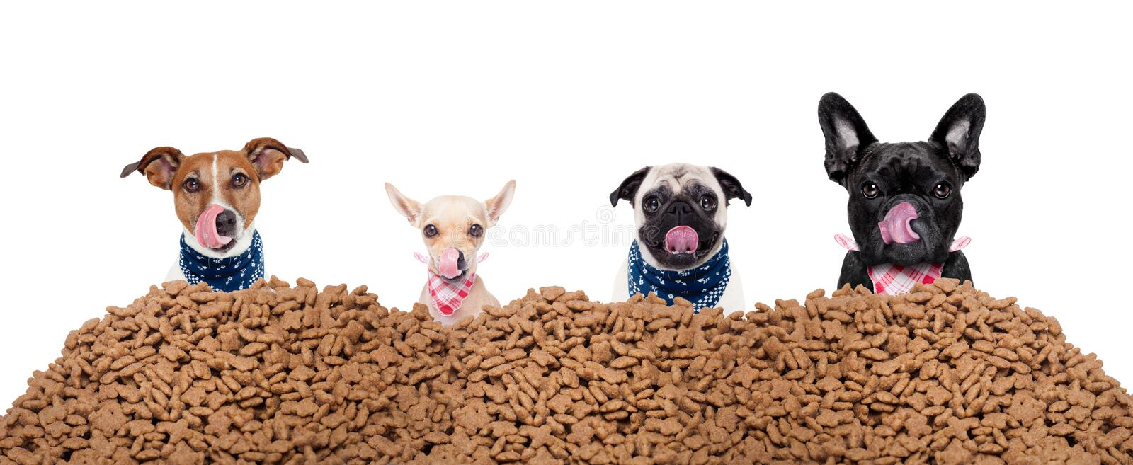 Group of dogs behind mound food royalty free stock photos