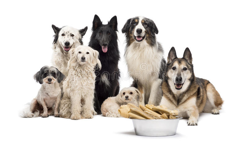 Group of dogs with a bowl full of bones stock photos