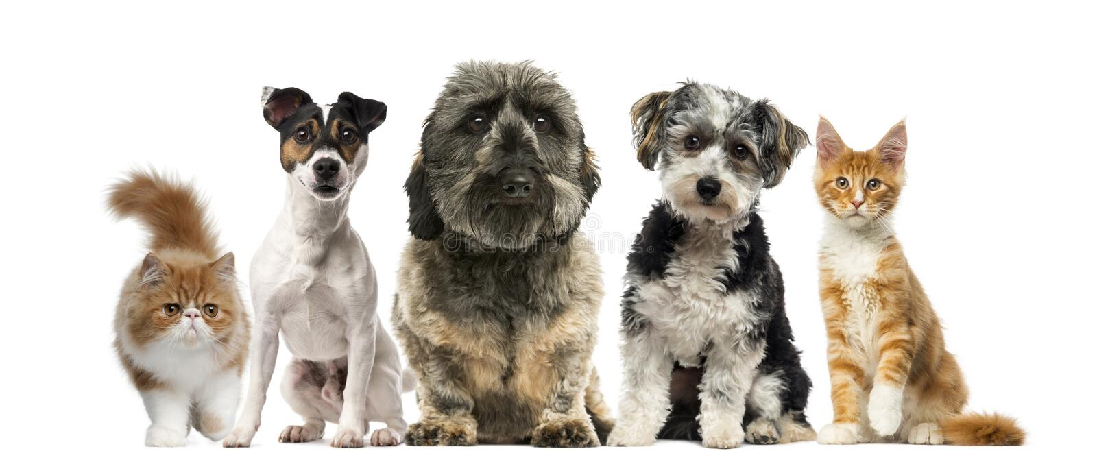 Group of dogs and cats. In front of a white background stock images