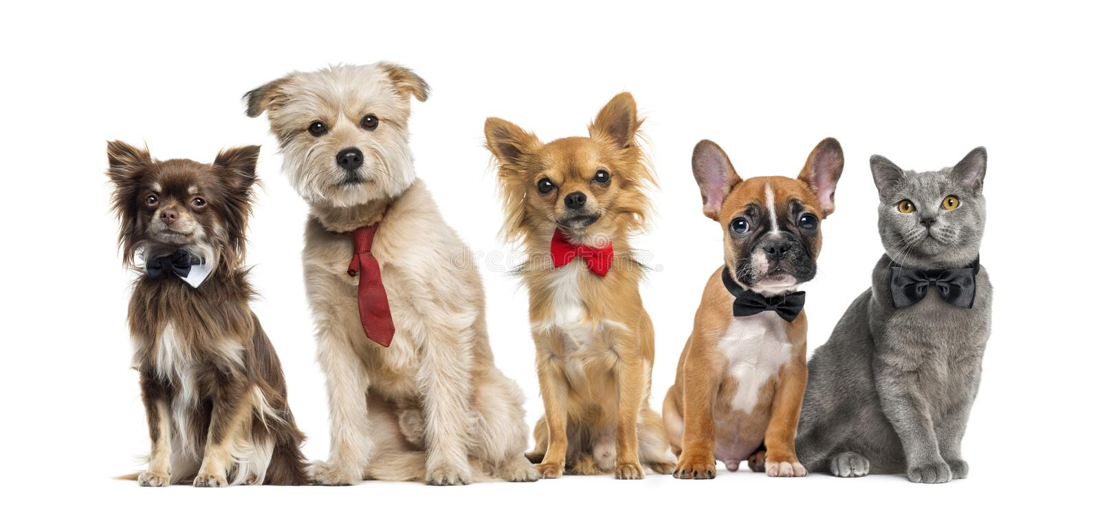 Group of dogs and cats. In front of a white background royalty free stock photography