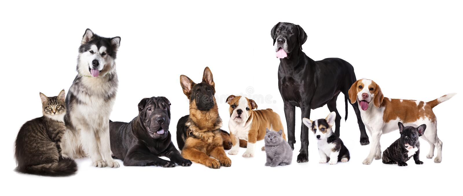 784 Group Dogs Cats Photos Free Royalty Free Stock Photos From Dreamstime