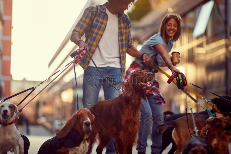 Group of dogs with dog walkers and leash ready to go for a walk. Outdoors royalty free stock photos