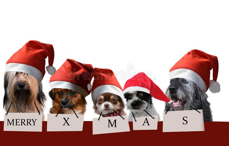 Group of dogs with santa claus hats stock images