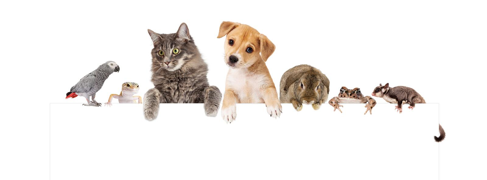 Group of Domestic Pets Over White Banner royalty free stock images