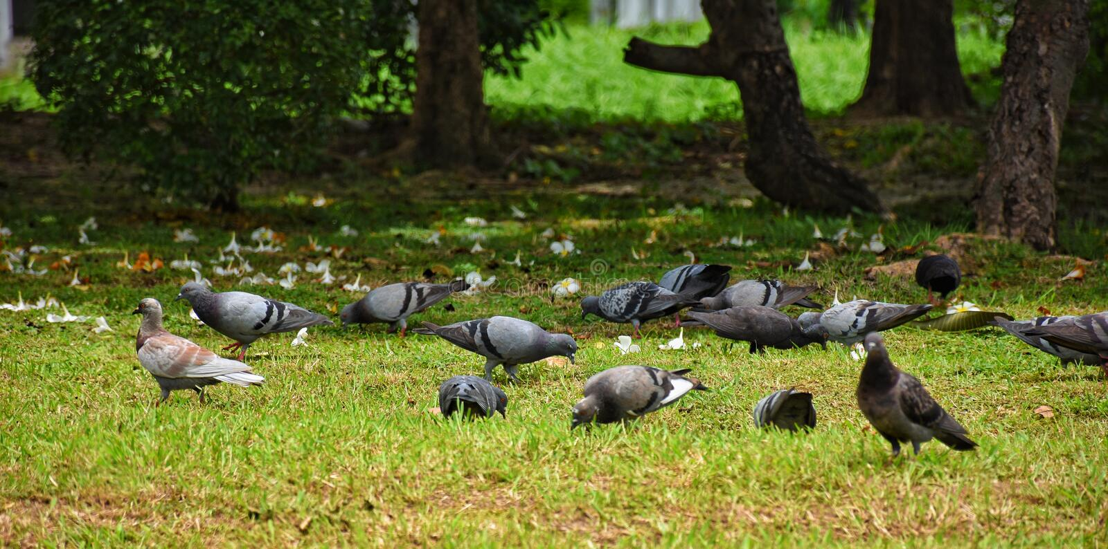 Group of dove on the grass royalty free stock photography