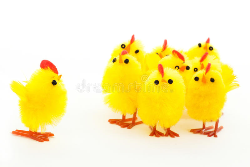 Group Of Easter Chickens And One Leader Royalty Free Stock Image