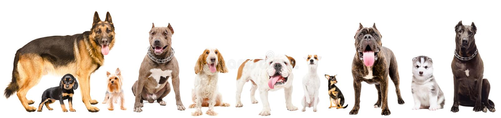 Group of eleven cute dogs stock images