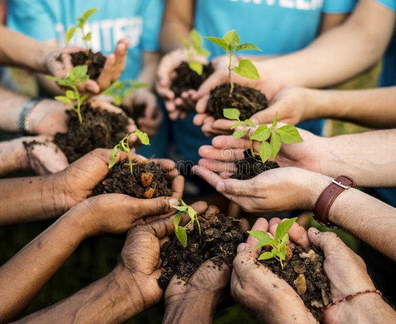 Group of environmental conservation people hands planting in aerial view royalty free stock image