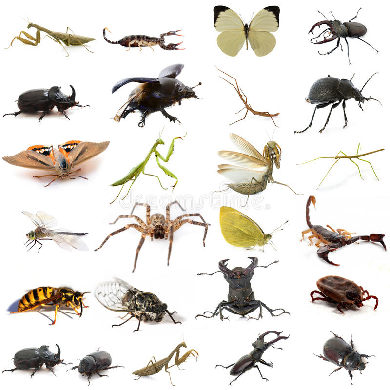Group of european insects. In front of white background royalty free stock image