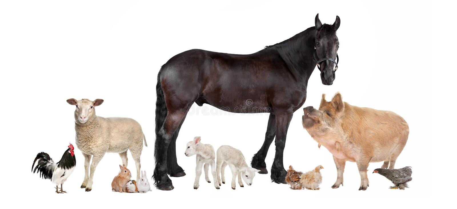 Group of farm animals royalty free stock photo