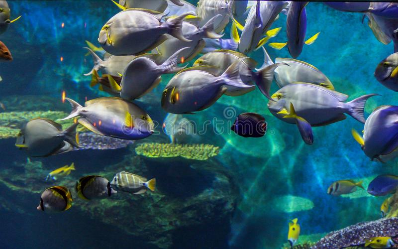 Group of fishes in the city aquarium. Animals in the town. stock photography