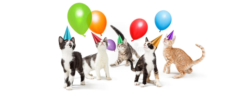 Playful Kitten Birthday Party Web Banner copy stock photo