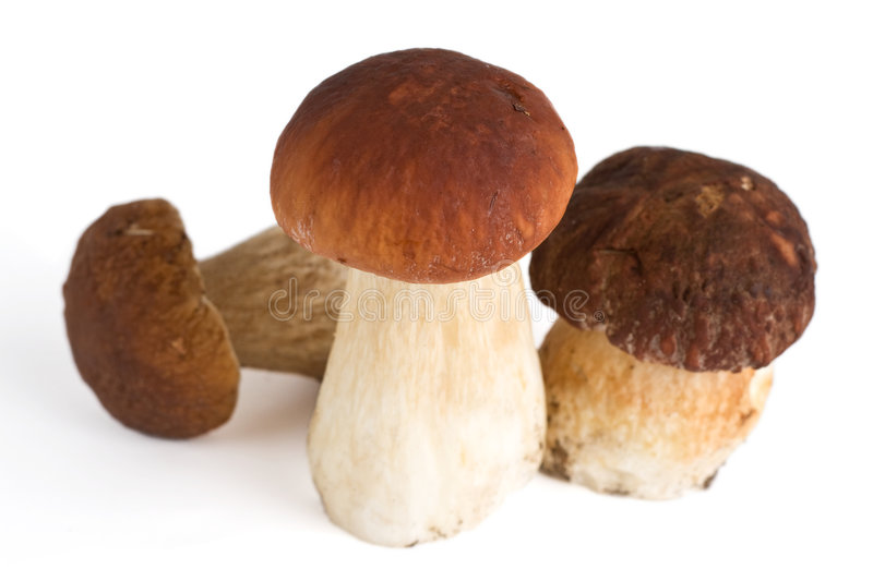Download Group of forest mushrooms stock image. Image of boletus - 6214597