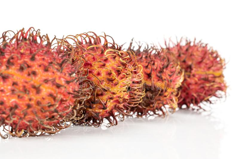 Fresh red rambutan isolated on white. Group of four whole unpeeled fresh red rambutan in row isolated on white background royalty free stock photography