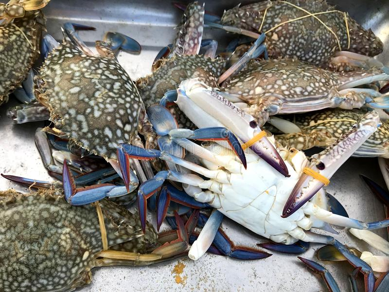 Fresh color crabs at the market in Thailand. stock images