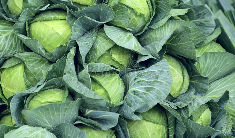 A group of fresh green cabbage leaves on the counter on the market. royalty free stock photo