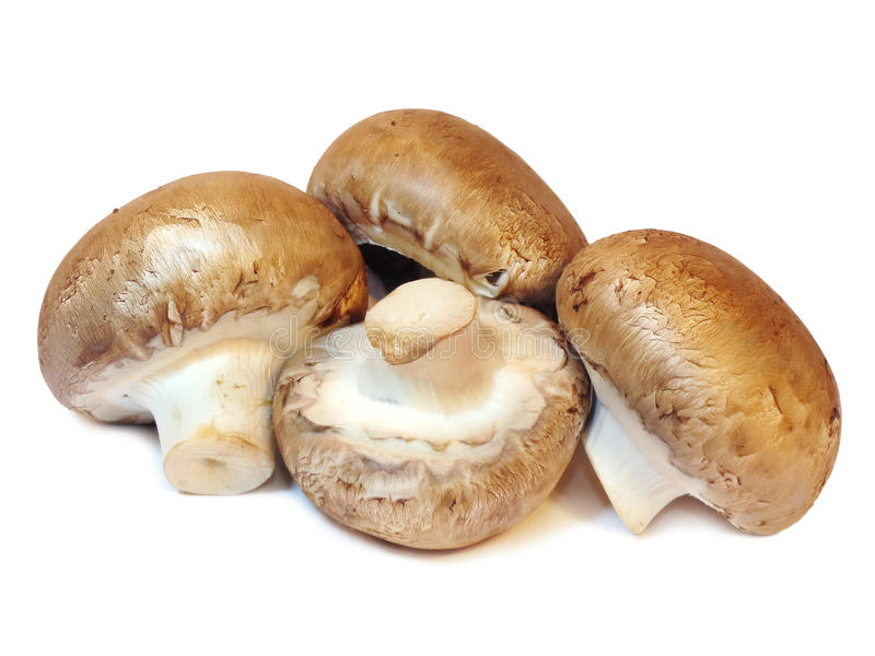 Group of fresh mushrooms isolated on a white background royalty free stock photo