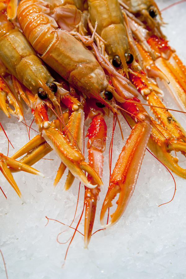 Group of fresh Norway lobsters placed on ice stock photo