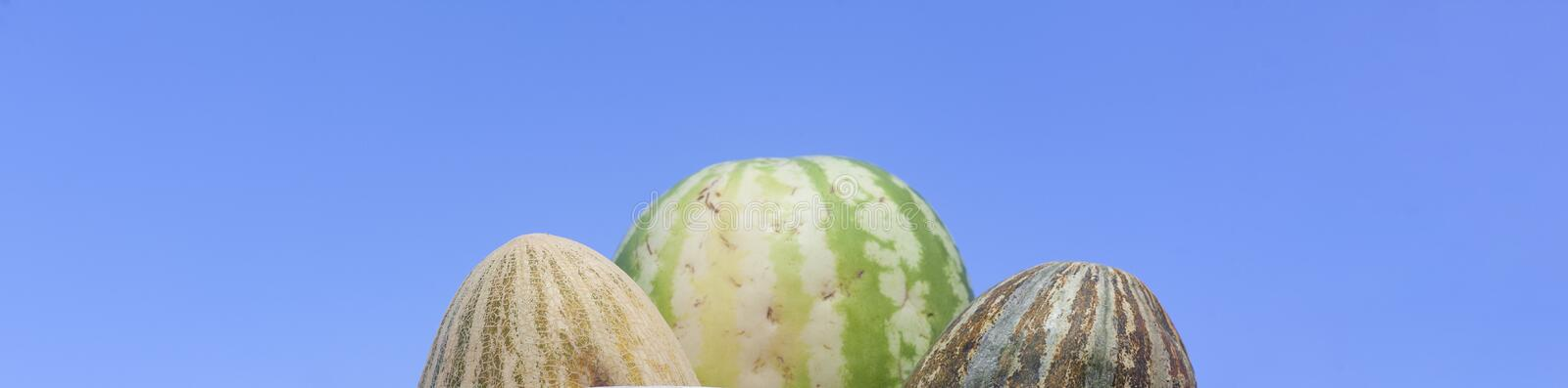 Group of fresh ripe yellow sweet melons and watermelons. Cantaloupe melons for sale in organic farm. Melons for sale in organic farm stock photography